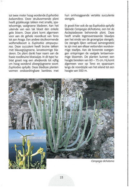 Tenerife, Christmas and Newyear planthunting  (NRV No. 94 Februari 2009 p. 23)