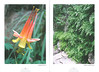 De flora en fauna van Zuidwest America. NRV. Folium Alpinum 107, Augustus 2012 pag.10-11