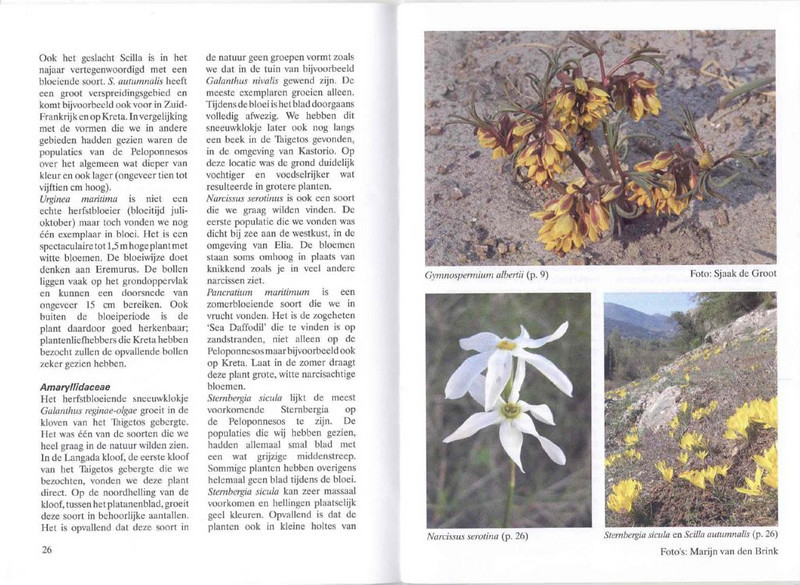 Autumn flowering plants of the Peloponnese, Greece (NRV, No. 85, Nov 2006, p. 26–27)