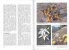 Autumn flowering plants of the Peloponnese, Greece (NRV, No. 85, Nov 2006, p. 26–27)
