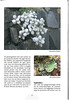 Tenerife, Christmas and Newyear planthunting  (NRV No. 94 Februari 2009 p. 21)