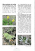 Tenerife, Christmas and Newyear planthunting  (NRV No. 94 Februari 2009 p. 19)