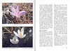 Autumn flowering plants of the Peloponnese, Greece (NRV, No. 85, Nov 2006, p. 30–31)