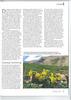 Article, Arnebia pulchra, Garten Praxis, 11-2012 page 9<br /> Photograph Marijn v.d. Brink