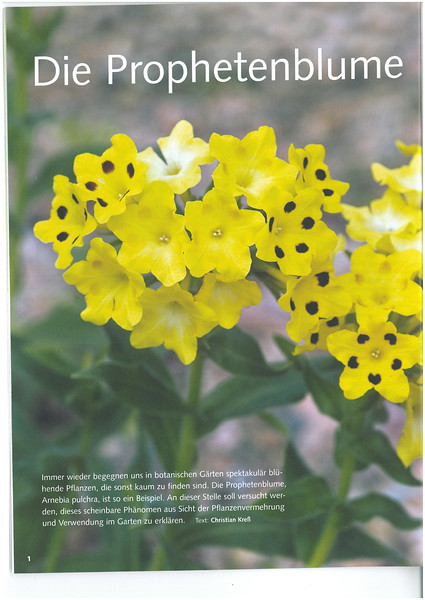 Article, Arnebia pulchra, Garten Praxis, 11-2012, page 8<br /> Photograph Marijn v.d. Brink
