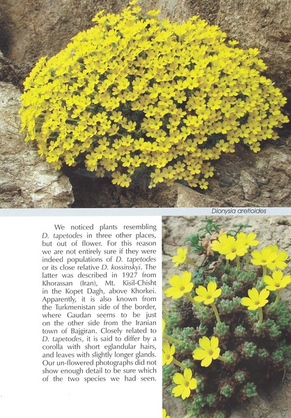 Page 73, In Search of Dionysia in Iran