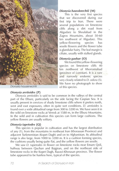 Page 72, In Search of Dionysia in Iran