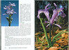 In Search of Autumn Bulbs in Morocco (Scottish Rock Garden Club bulletin nr.125 July 2010 pag. 80-81)