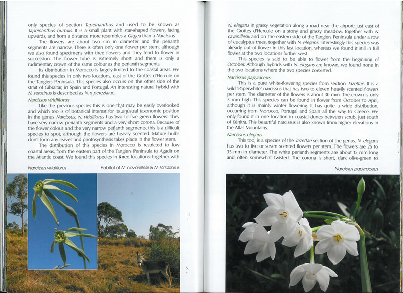 In Search of Autumn Bulbs in Morocco (Scottish Rock Garden Club bulletin nr.125 July 2010 pag. 74-75)
