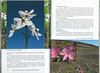 In Search of Autumn Bulbs in Morocco (Scottish Rock Garden Club bulletin nr.125 July 2010 pag. 76-77)