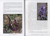 Autumn flowers of the Peloponnese (Scottish Rock Garden Club bulletin nr.115 July 2005 pag,16, 17)