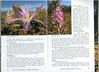 In Search of Autumn Bulbs in Morocco (Scottish Rock Garden Club bulletin nr.125 July 2010 pag. 78-79)