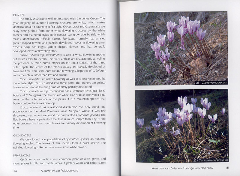 Autumn flowers of the Peloponnese (Scottish Rock Garden Club bulletin nr.115 July 2005 pag,14, 15)