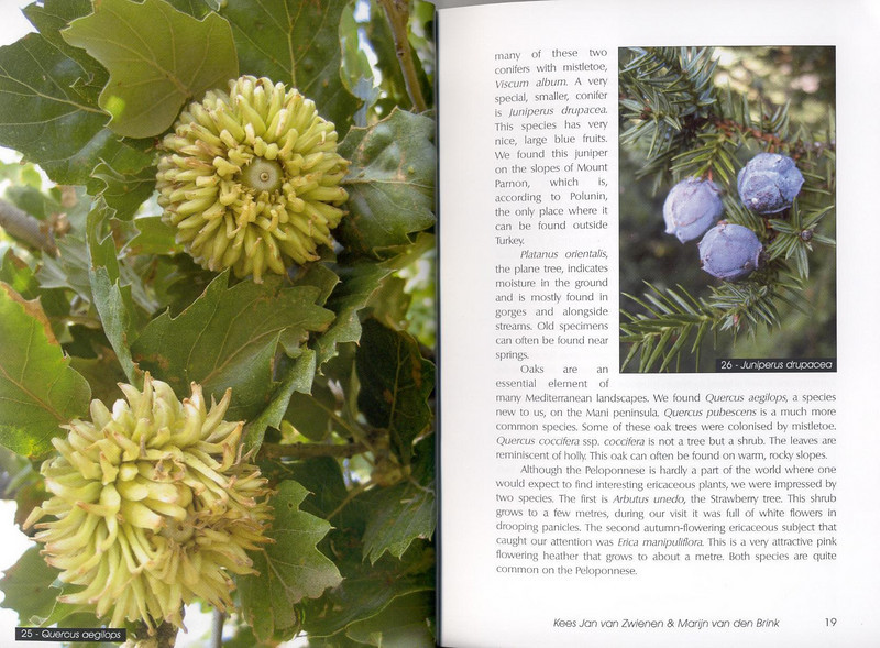 Autumn flowers of the Peloponnese (Scottish Rock Garden Club bulletin nr.115 July 2005 pag,18, 19)