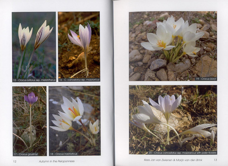 Autumn flowers of the Peloponnese (Scottish Rock Garden Club bulletin nr.115 July 2005 pag,12, 13)