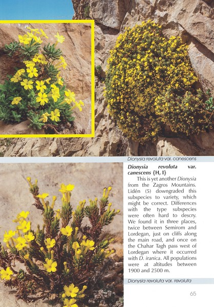 Page 65, In Search of Dionysia in Iran