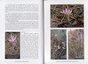 Autumn flowers of the Peloponnese (Scottish Rock Garden Club bulletin nr.115 July 2005 pag,6, 7)