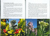 In Search of Autumn Bulbs in Morocco (Scottish Rock Garden Club bulletin nr.125 July 2010 pag. 70-71)