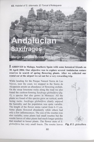 Andalusian saxifrages (Sax. Society Magazine, No. 13, Summer 2005, p. 60)