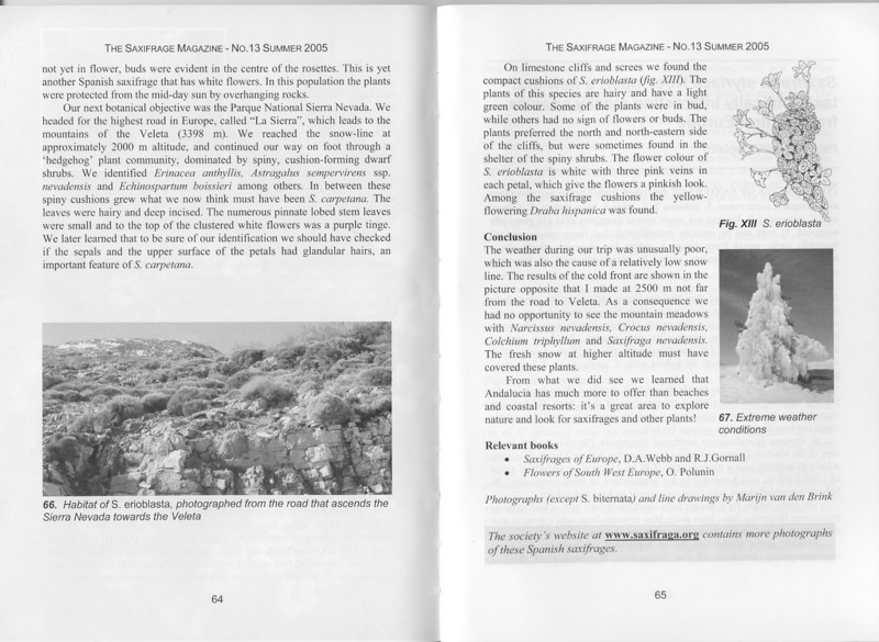 Andalusian Saxifrages (Sax. Society Magazine, No. 13, Summer 2005, p. 64–65)
