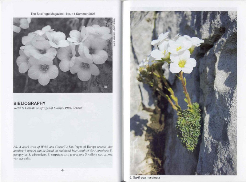 Saxifrages of South Italy (Sax. Society Magazine, No. 14, Summer 2006, p. 44–45)