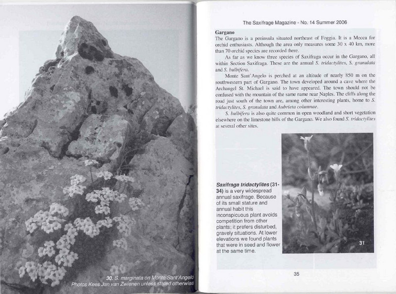 Saxifrages of South Italy (Sax. Society Magazine, No. 14, Summer 2006, p. 35)