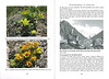 The mountain flora of the Karakorum ( Sax. Society Magazine, No 18, Winter 2010, p. 15-16)