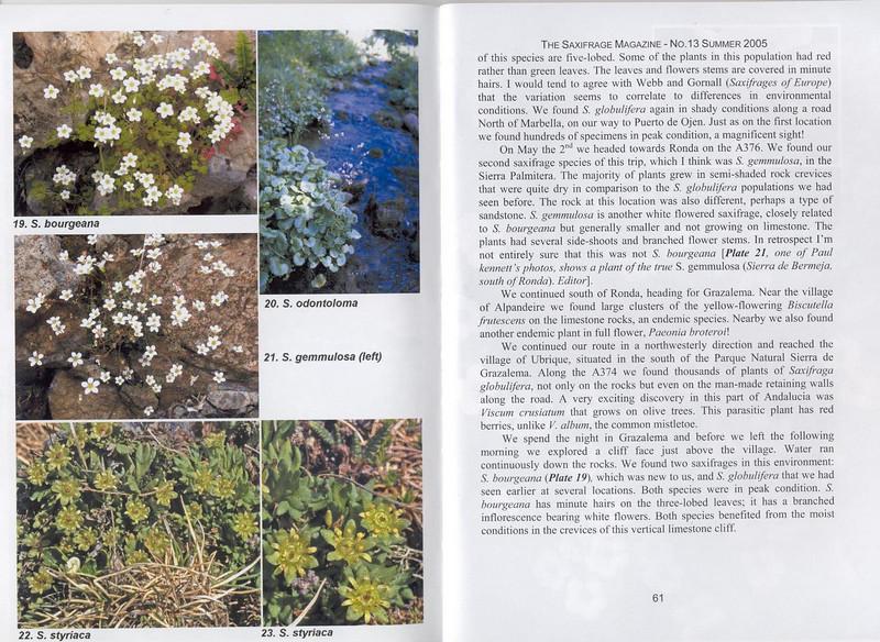 Andalusian Saxifrages (Sax. Society Magazine, No. 13, Summer 2005, p. 61)