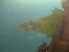 Asian Kelp Wakame (invasive species)<br /> Undaria pinnatifida