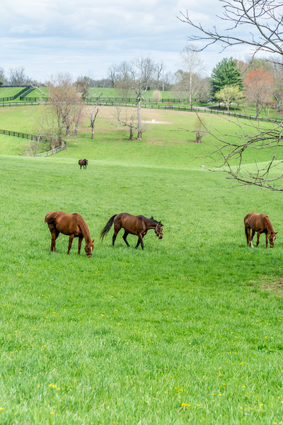 Kentucky Farm Bureau News May 2015