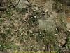 Fragaria nubicola, Kothe 3700m-Zatwrala 3800m