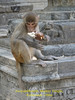 Swayambhunath, Monkey Temple, Kathmandu 1300m