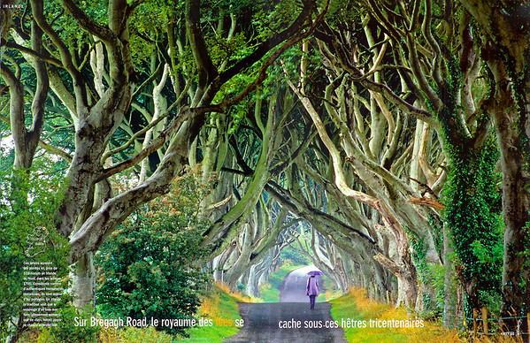 The text reads:  On Bregagh Road, the Land of the Fairies is hidden under three centuries old beeches.  These trees have been planted here, near Stranocum in Ireland, in the 18th century. Seen as true historical monuments, they have been protected as such. In Ireland tradition has it that the fairies of the forest offer luck and protection.