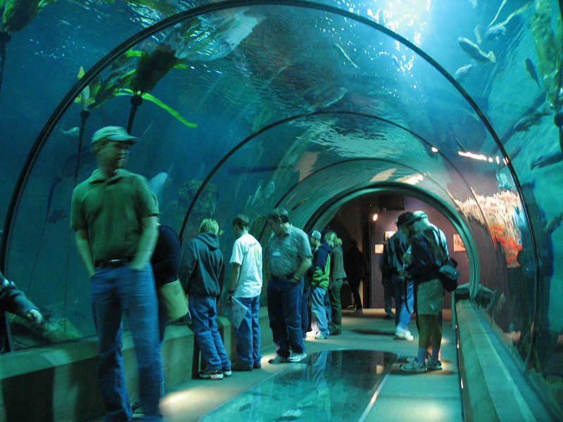 Viewing tunnel in Passages of the Deep, Oregon Coast Aquarium