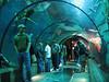 Viewing tunnel in Passages of the Deep, Oregon Coast Aquarium