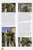 Folium Alpinum 117, pag. 26