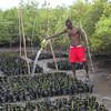 Caribbean Islands Hotspot, © FoProBiM