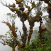 East Melanesian Islands Hotspot, © AMNH/photo by Chris Filardi