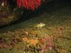 YOY Rockfish - Neah Bay area