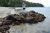 tidepooling lopez island