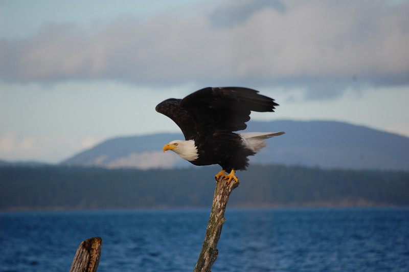 eagle lopez
