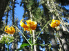 olympic peninsula flowers