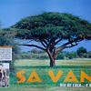 Savana / Savanna