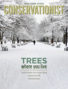 New York State Conservationist Magazine, February 2020 issue