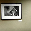 An exhibition of 23 images at St. Alphonsus RMC for the month of January.