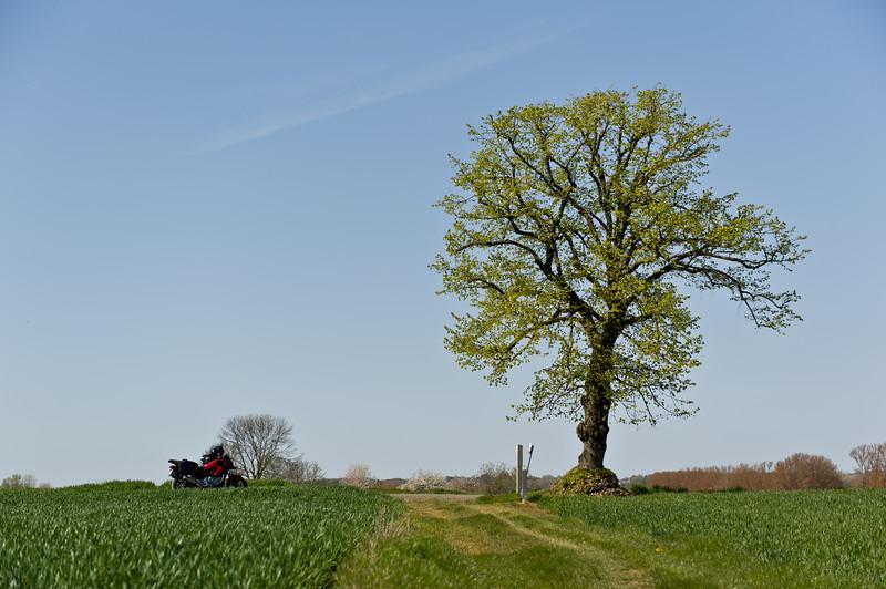 Halle - de boom van Witse