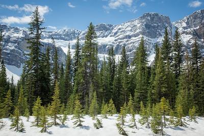 Alberta 93, Banff National Park