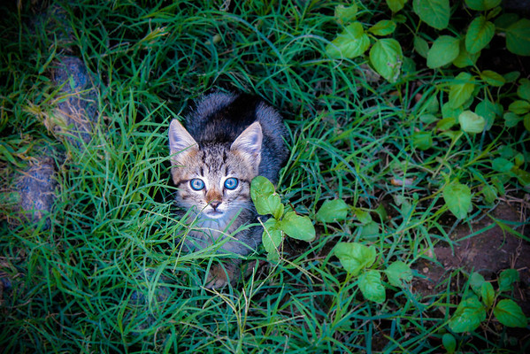 One of the many feral cats of Turkey. He looks cute, but he would've scratched my eyes out if I'd reached for him.