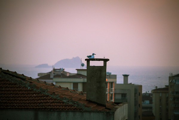 A seagull warms himself on a chimney top in Istanbul