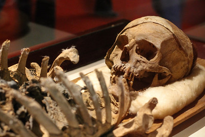 A preserved skeleton on display at the Istanbul Archeological Museum.